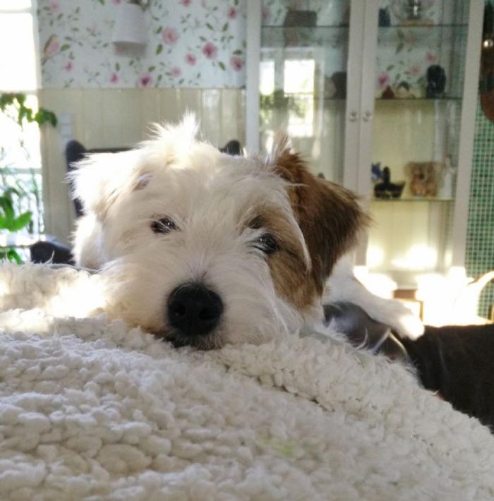 Bette på sin yndlingsplads, på ryggen af sofaen.