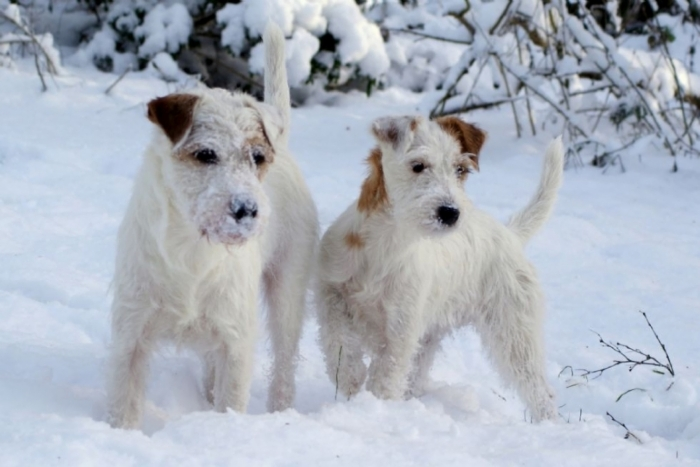 Albert og Bette i sneen